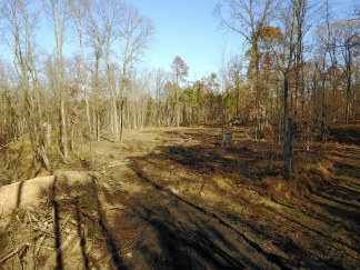 After the land clearing!